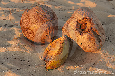 Three coconuts on beach