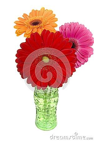 Three colorful gerber daisies in vase