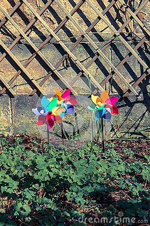 Three coloured pinwheels in a garden