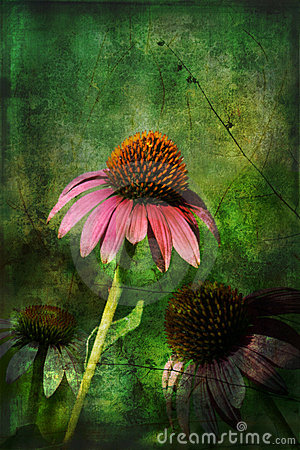 Three Coneflowers with Gunge Layers