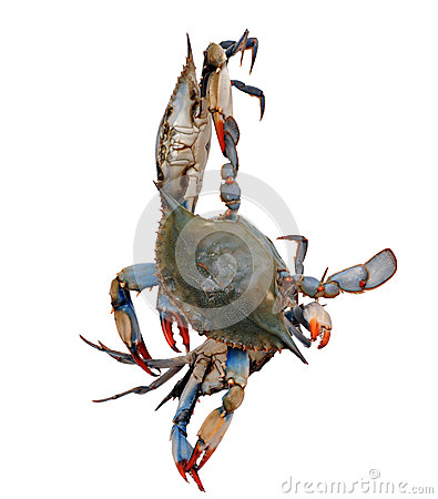 Three crabs isolated