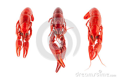Three crayfish