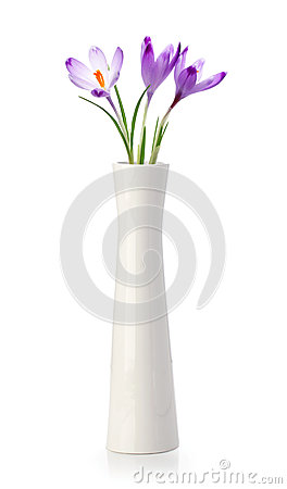 Free Three Crocus Flowers In White Vase Stock Photography - 24633002