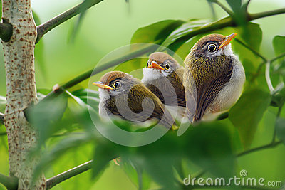 Three of cute birds