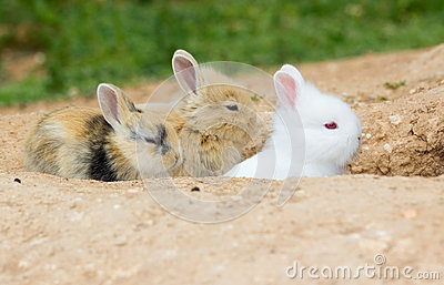 Three cute little bunnies