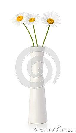 Three daisy flowers in white vase