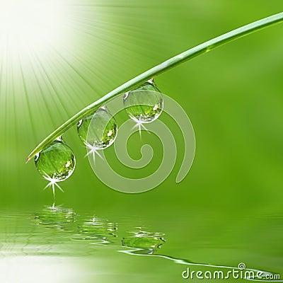Three dew drops