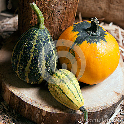 Three different decorative pumpkins