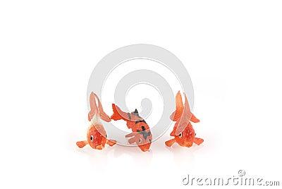 Three different goldfishes