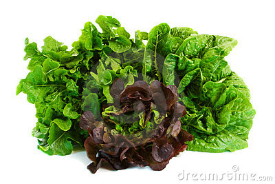 Three Different Lettuce Varieties
