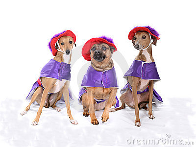 Three dogs wearing red and purple costumes