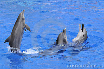 Three Dolphins In Water Stock Photo - Image: 11961370