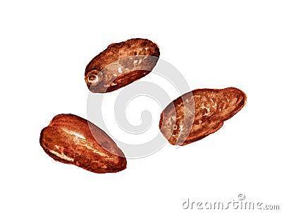 Three dried dates Stock Photo