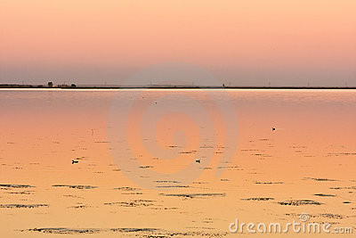 Three ducks on calm lake at sunset