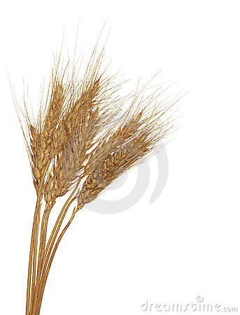 Three ear of wheat group