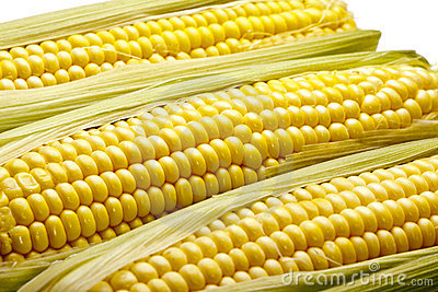 Three Ears of Corn