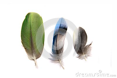 Three feathers on white