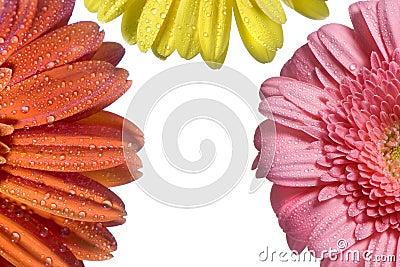 Three Flower Background 2