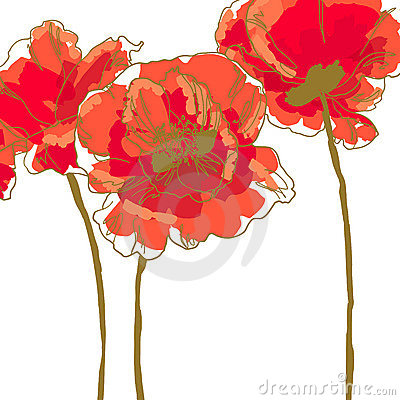Three flower of poppy