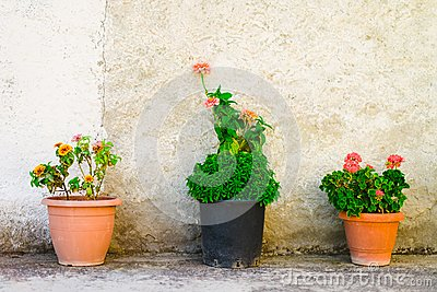 Three flowerpots outdoor