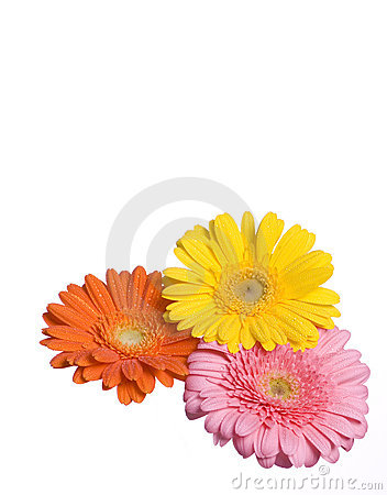 Three Flowers Isolated