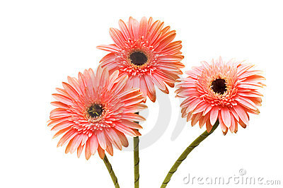 Three flowers isolated on the white background