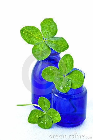 Free Three Four-leaved Clovers Stock Photo - 9710560