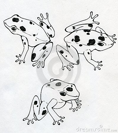 Three frogs