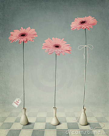 Free Three Gerber In White Vases. Royalty Free Stock Photo - 17585195
