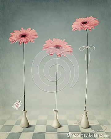 Three Gerber in white vases.