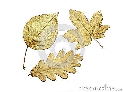 Three golden leaves