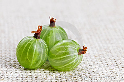 Three gooseberry fruit, on gray linen cloth