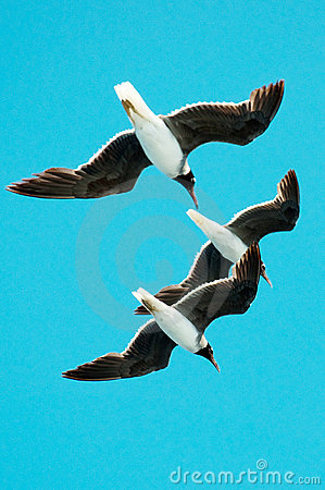 Three gulls hovering in the sky