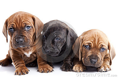 Three happy dogs  on white background