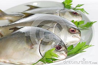 Three horse mackerel