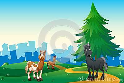 Three horses at the hilltop across the village