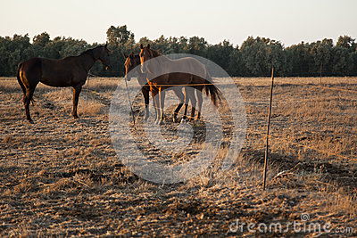 Horse Gathering in a Field