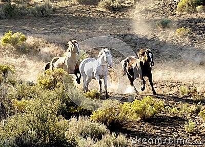Three Horses Running Wild