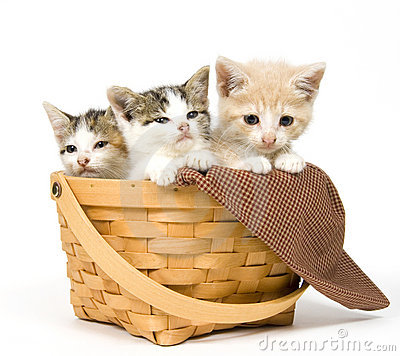 Free Three Kittens In A Basket Stock Photos - 1012773