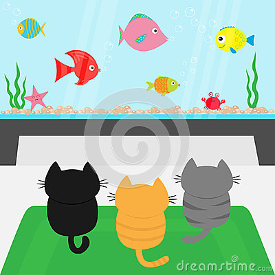 Free Three Kittens On Carpet Rug Looking To Big Aquarium With Fish Set. Little Cat Family. Royalty Free Stock Photo - 97659695