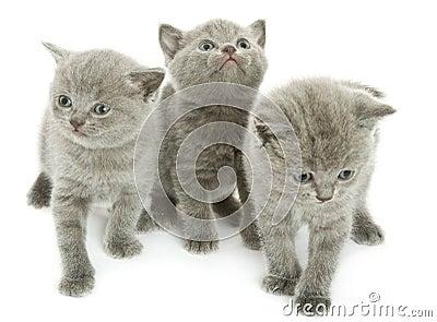 Three kittens over white