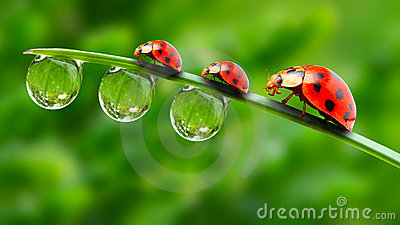 Three ladybugs.