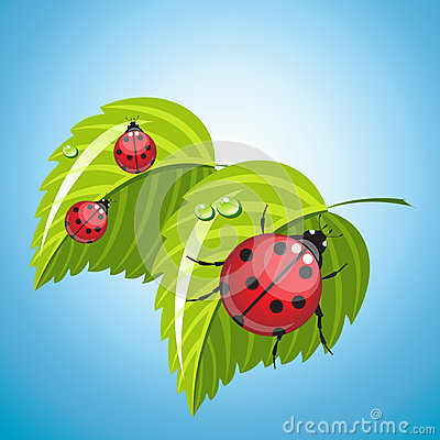 Three ladybugs on the green leaves