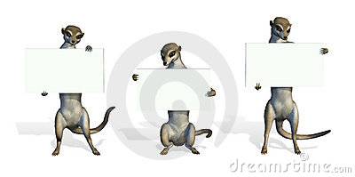Three Meerkats Holding Blank Signs