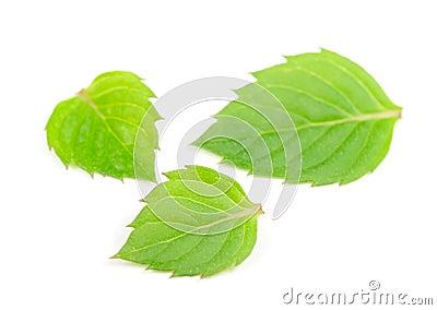 Three Mint Leaves