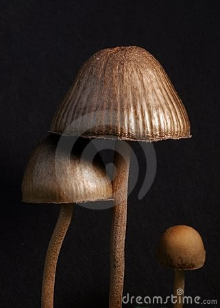 Free Three Mushrooms Royalty Free Stock Images - 14601419