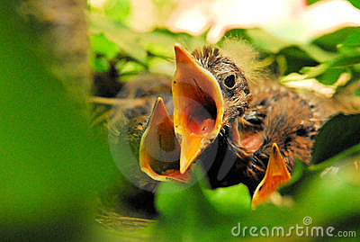 Three in a Nest 02