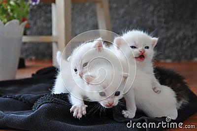 Three newborn kittens on the porch