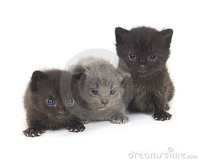 Three newborn kittens on white