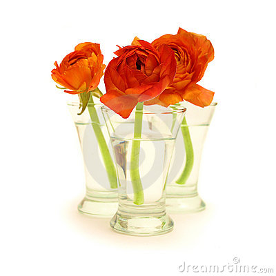 Free Three Orange Flowers In A Vase With Water Stock Image - 13724581